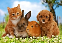Lallabi Online Pet shop india