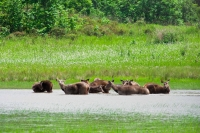 Sundarban Tours