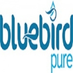 Bluebird Pure