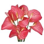 Bloom n Bud
