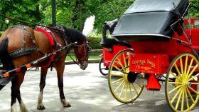 Central Park Carriage Tours