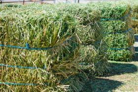 Alfalfa/Lucerne Hay For Sale