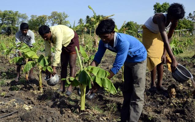 Lallabi labour/manpower suppliers india