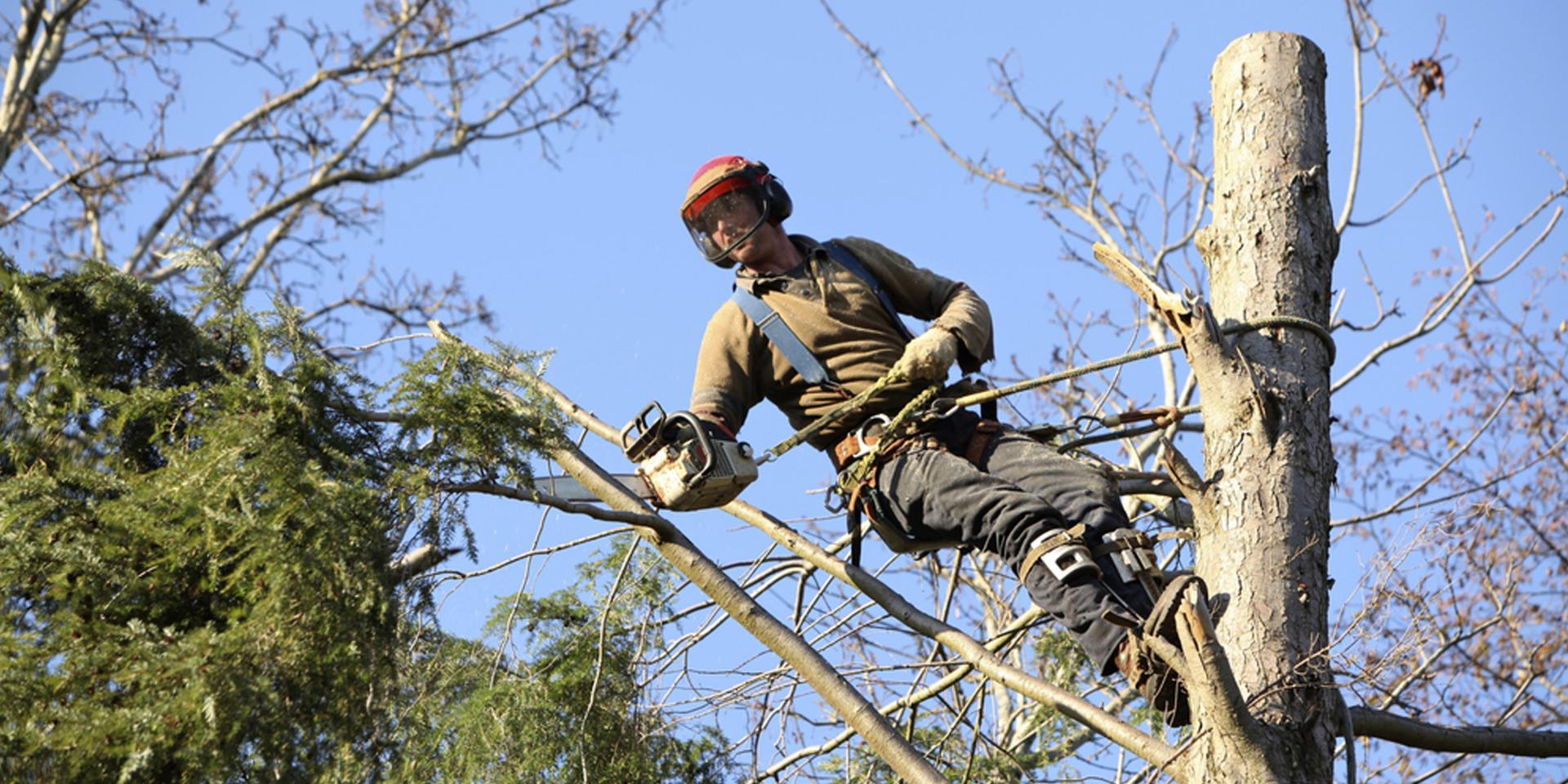 WOODSTOCK TREE & STUMP REMOVAL