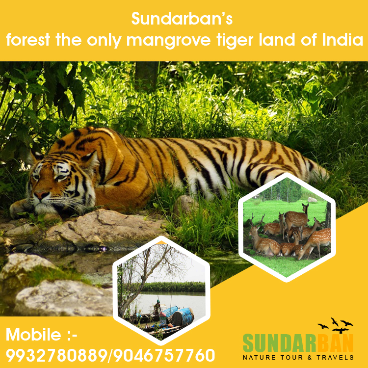 Sundarban Nature Tour