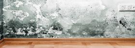 Mold Removal San Diego