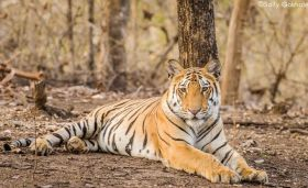 Pench National Park Booking