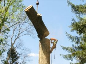 Appleton Tree Service WI
