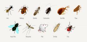 City Pest Care