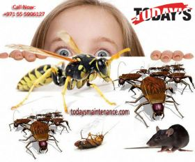 Cheap Pest Control Dubai