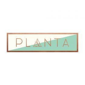 Planta South Beach