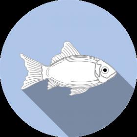 Fishing Gear Guide