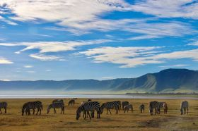 Tanzania Safari 11days