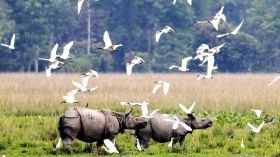 Kaziranga and Shillong