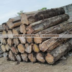 Burma Teak Wood