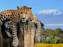 Masai Mara Travel Packages