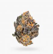 Buy Black Cherry Punch (AAAA) Weed Online   Calmin