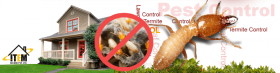 Termite Control In India- Itemsecure.in