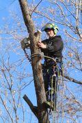 Tree Service South Jordan Ut