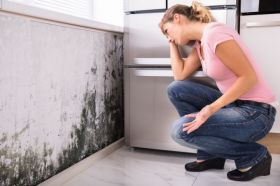 Mold Testing and Removal