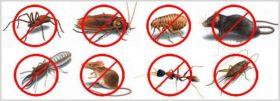 Syracuse Pest control,Buffalo Pest control