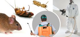 Insect Control Service, Cockroach (Ants) Control