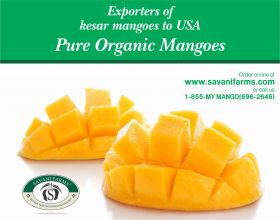 Online Kesar Mango at Savanifarms