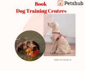 Dog Training Services - Petshub