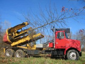 Affordable Tree Planting Services
