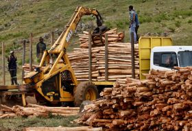 The Case for Digitisation of the Forestry Industry